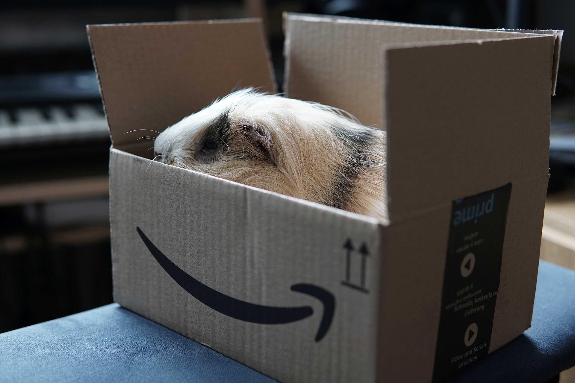 Prime Video, Amazon
